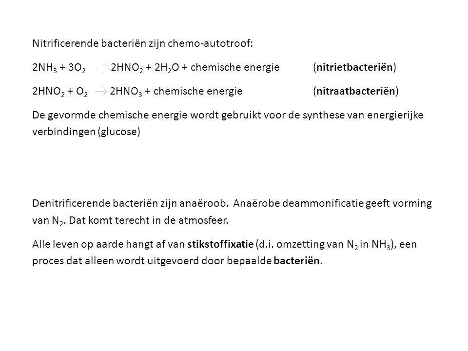 Nitrificerende bacteriën zijn chemo-autotroof: 2NH 3 + 3O 2  2HNO 2 + 2H 2 O + chemische energie (nitrietbacteriën) 2HNO 2 + O 2  2HNO 3 + chemische