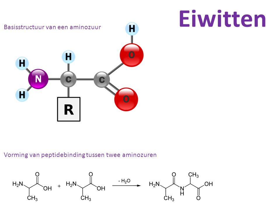 Basisstructuur van een aminozuur Vorming van peptidebinding tussen twee aminozuren Eiwitten