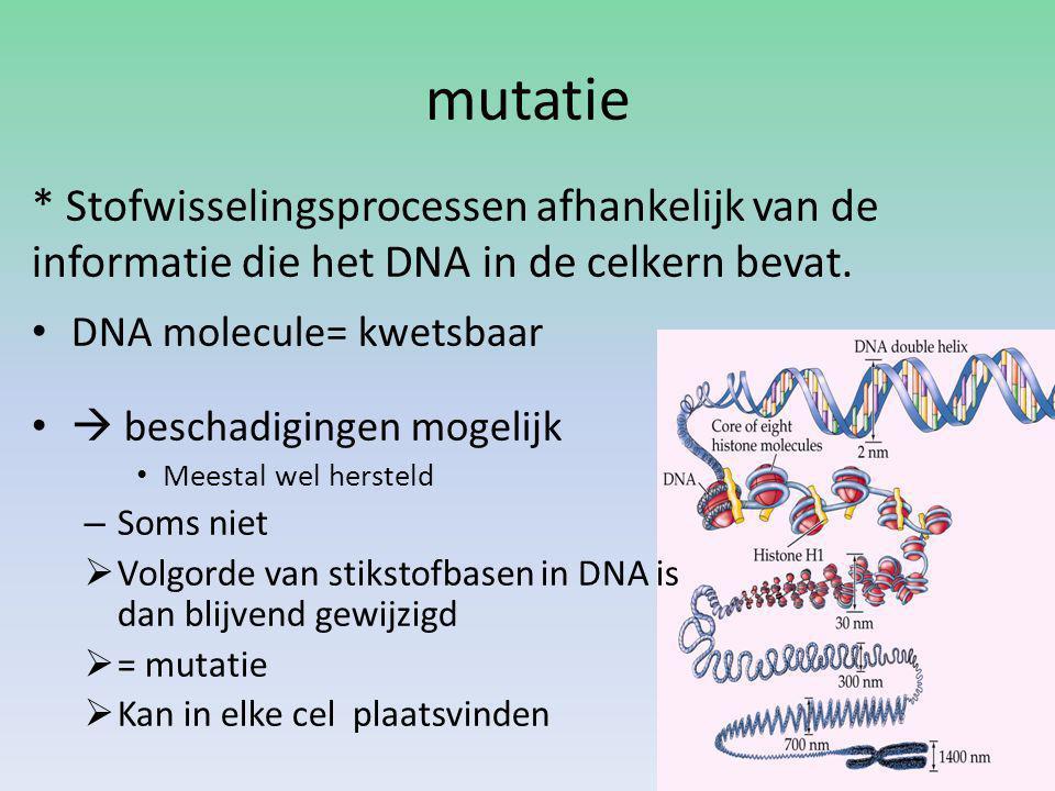 mutatie DNA molecule= kwetsbaar  beschadigingen mogelijk Meestal wel hersteld – Soms niet  Volgorde van stikstofbasen in DNA is dan blijvend gewijzigd  = mutatie  Kan in elke cel plaatsvinden * Stofwisselingsprocessen afhankelijk van de informatie die het DNA in de celkern bevat.