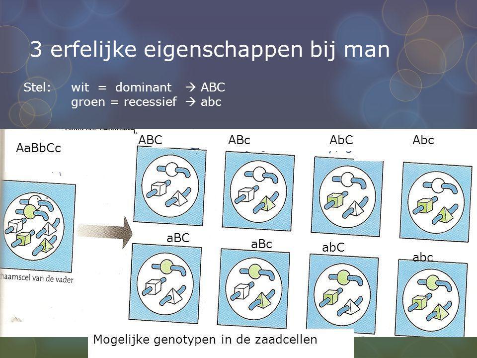 3 erfelijke eigenschappen bij man AaBbCc ABCABcAbCAbc Mogelijke genotypen in de zaadcellen aBC aBc Stel: wit = dominant  ABC groen = recessief  abc