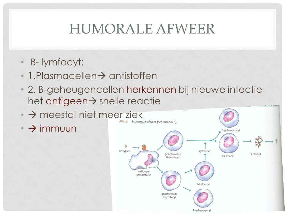 HUMORALE AFWEER B- lymfocyt: 1.Plasmacellen  antistoffen 2. B-geheugencellen herkennen bij nieuwe infectie het antigeen  snelle reactie  meestal ni