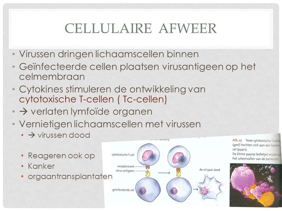 CELLULAIRE AFWEER Virussen dringen lichaamscellen binnen Geïnfecteerde cellen plaatsen virusantigeen op het celmembraan Cytokines stimuleren de ontwik
