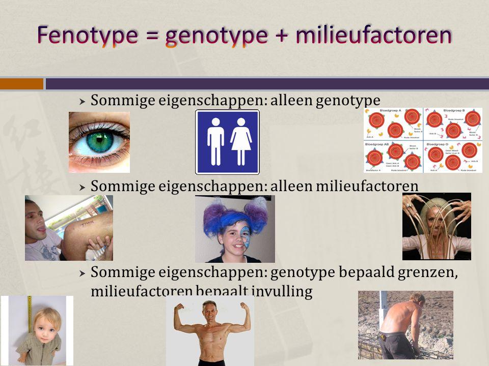  Sommige eigenschappen: alleen genotype  Sommige eigenschappen: alleen milieufactoren  Sommige eigenschappen: genotype bepaald grenzen, milieufacto