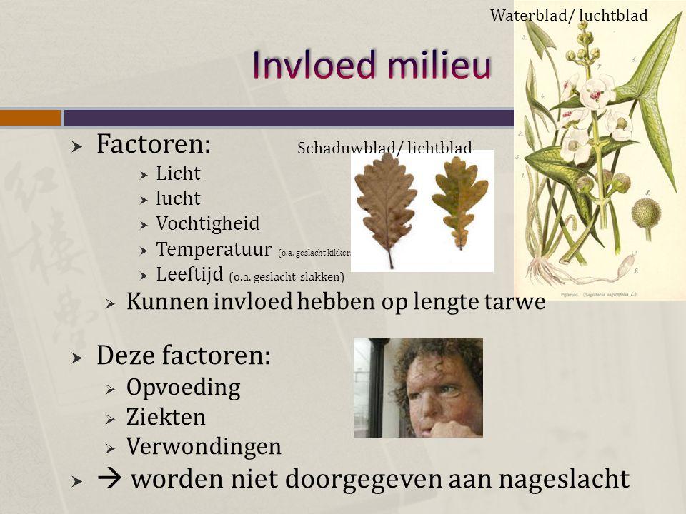  Factoren:  Licht  lucht  Vochtigheid  Temperatuur (o.a. geslacht kikkers)  Leeftijd (o.a. geslacht slakken)  Kunnen invloed hebben op lengte t