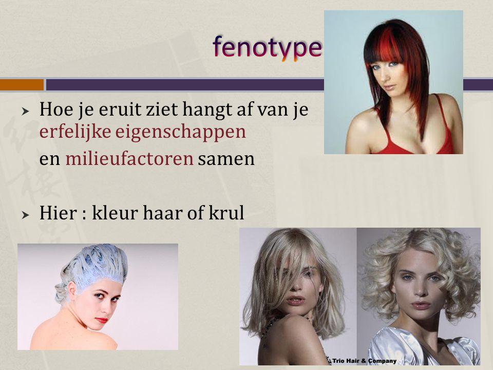  Hoe je eruit ziet hangt af van je erfelijke eigenschappen en milieufactoren samen  Hier : kleur haar of krul