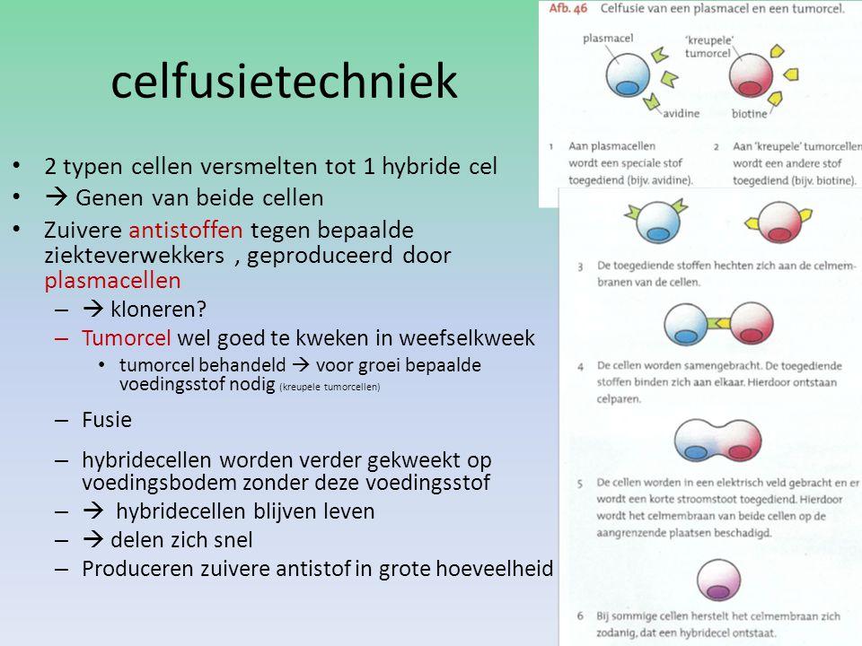 celfusietechniek 2 typen cellen versmelten tot 1 hybride cel  Genen van beide cellen Zuivere antistoffen tegen bepaalde ziekteverwekkers, geproduceer