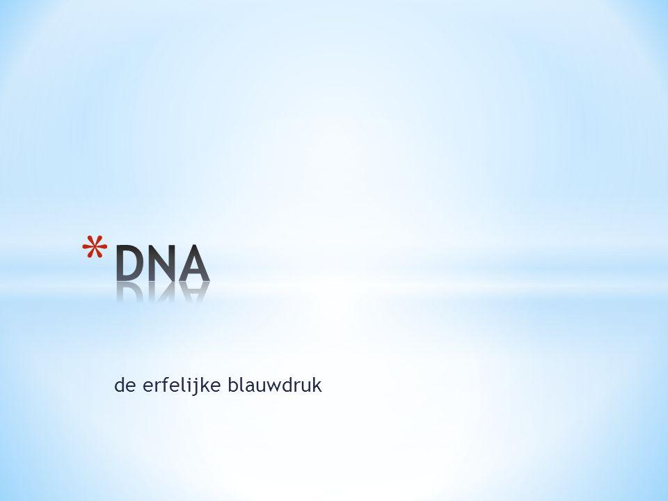 * In celkern: chromosomen * Chromosomen bestaan uit DNA