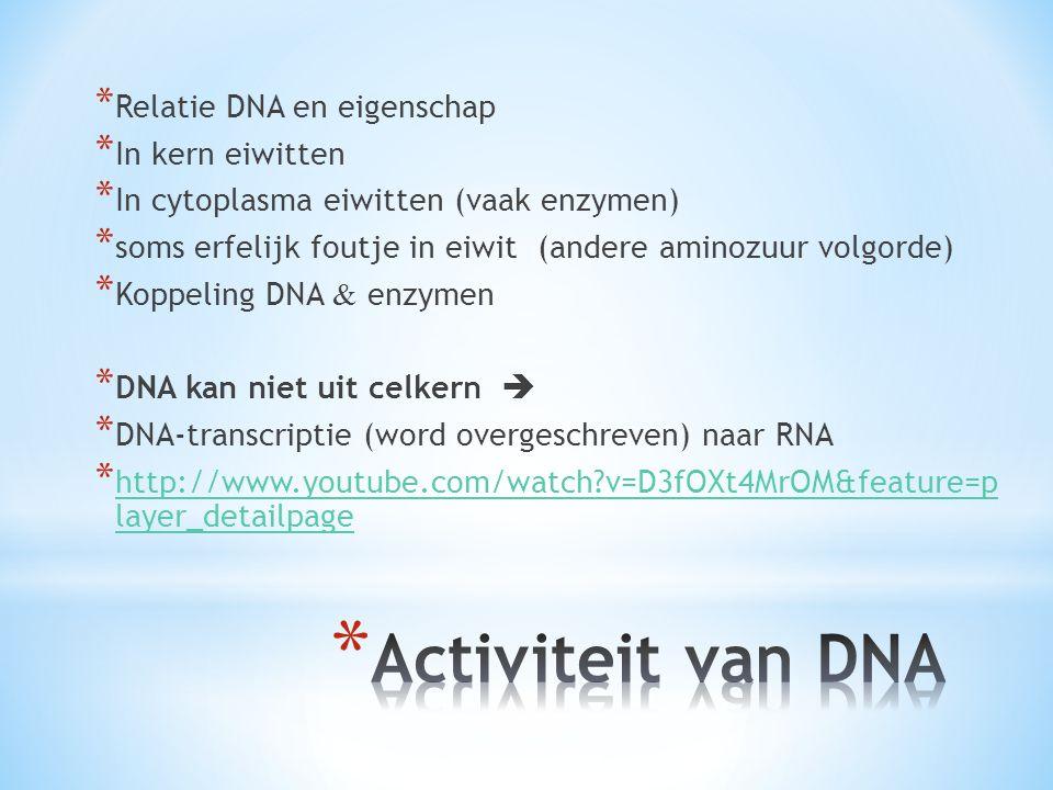 * Relatie DNA en eigenschap * In kern eiwitten * In cytoplasma eiwitten (vaak enzymen) * soms erfelijk foutje in eiwit (andere aminozuur volgorde) * Koppeling DNA & enzymen * DNA kan niet uit celkern  * DNA-transcriptie (word overgeschreven) naar RNA * http://www.youtube.com/watch?v=D3fOXt4MrOM&feature=p layer_detailpage http://www.youtube.com/watch?v=D3fOXt4MrOM&feature=p layer_detailpage