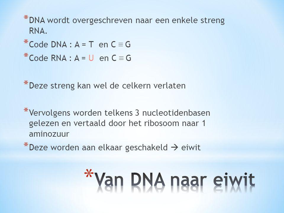 * DNA wordt overgeschreven naar een enkele streng RNA. * Code DNA : A = T en C ≡ G * Code RNA : A = U en C ≡ G * Deze streng kan wel de celkern verlat