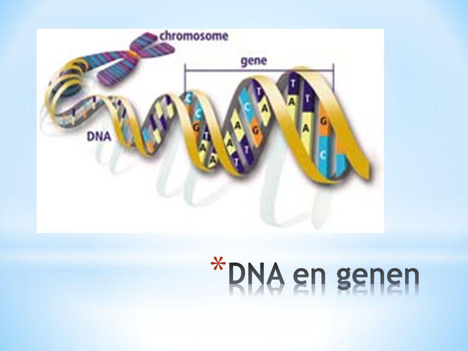 Alignment van de GULO-genen van mens, chimpansee, makaak, orang-utan, rat, cavia, koe en kip.