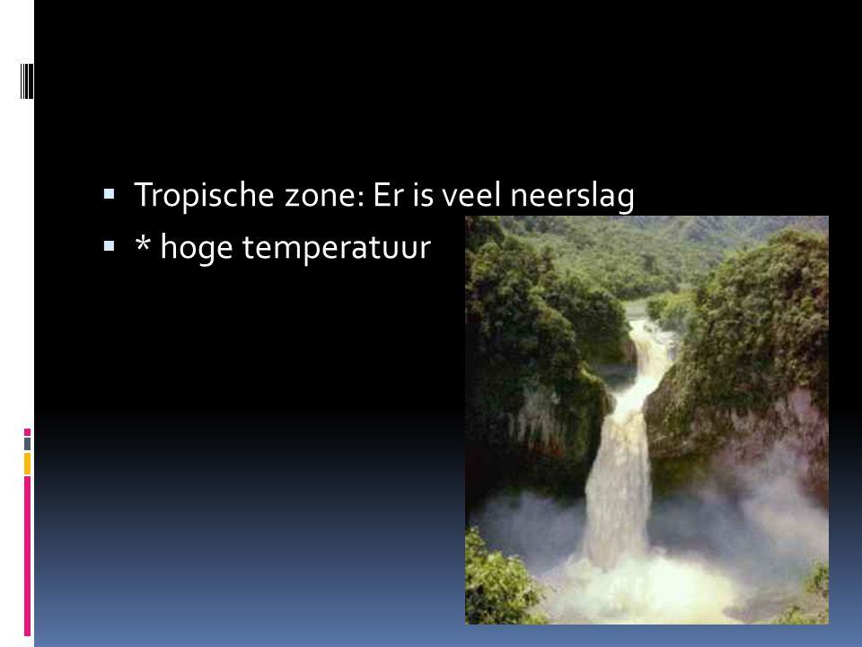  Tropische zone: Er is veel neerslag  * hoge temperatuur
