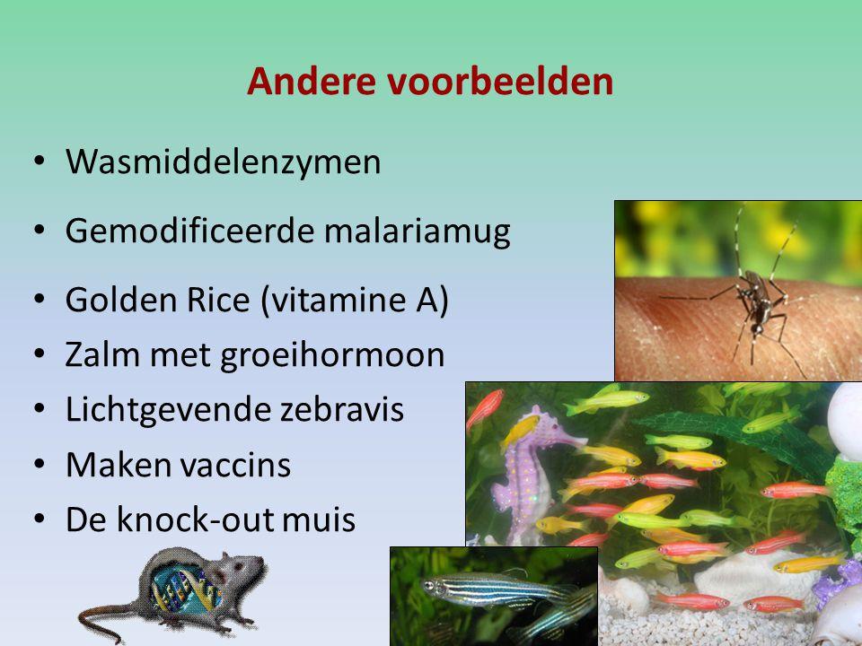 Andere voorbeelden Wasmiddelenzymen Gemodificeerde malariamug Golden Rice (vitamine A) Zalm met groeihormoon Lichtgevende zebravis Maken vaccins De knock-out muis