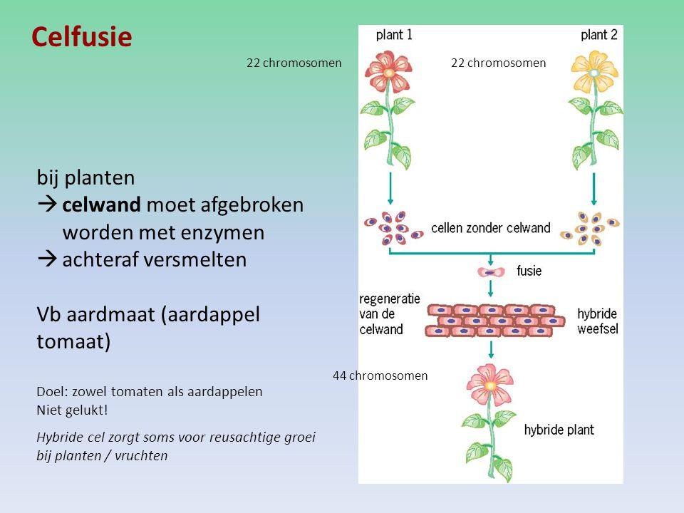 Celfusie 22 chromosomen 44 chromosomen bij planten  celwand moet afgebroken worden met enzymen  achteraf versmelten Vb aardmaat (aardappel tomaat) Doel: zowel tomaten als aardappelen Niet gelukt.