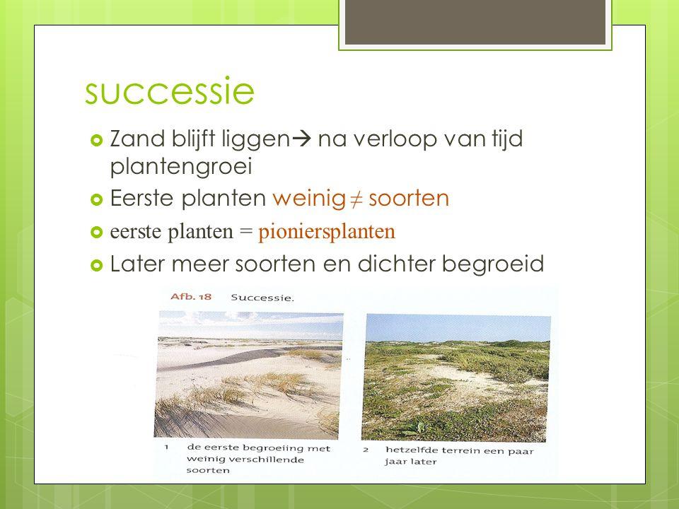  Zand blijft liggen  na verloop van tijd plantengroei  Eerste planten weinig ≠ soorten  eerste planten = pioniersplanten  Later meer soorten en d