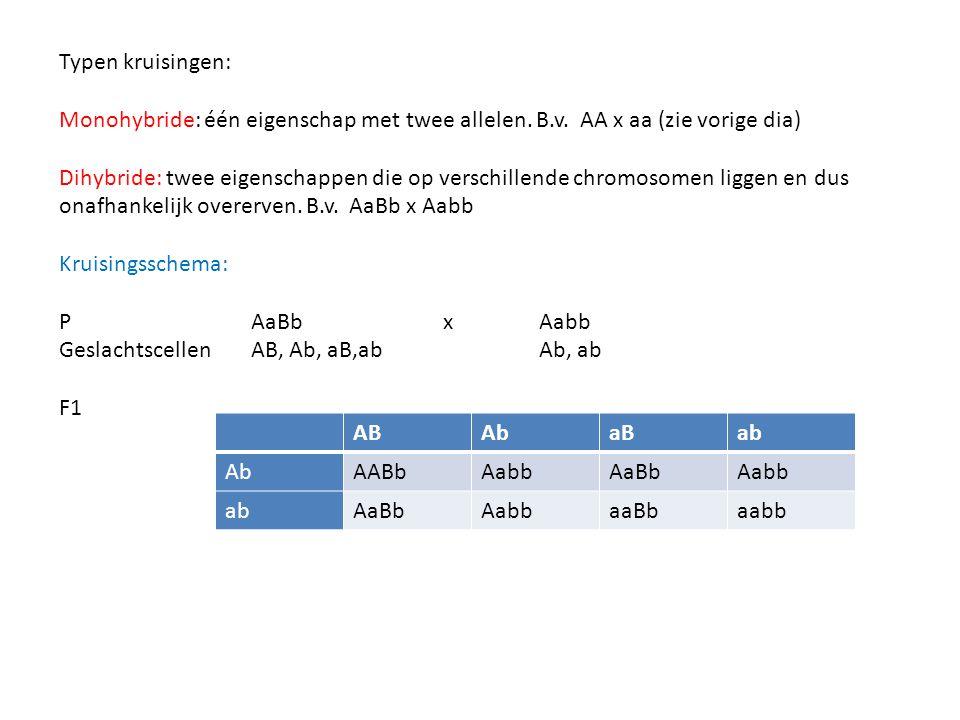 Typen kruisingen: Monohybride: één eigenschap met twee allelen. B.v. AA x aa (zie vorige dia) Dihybride: twee eigenschappen die op verschillende chrom