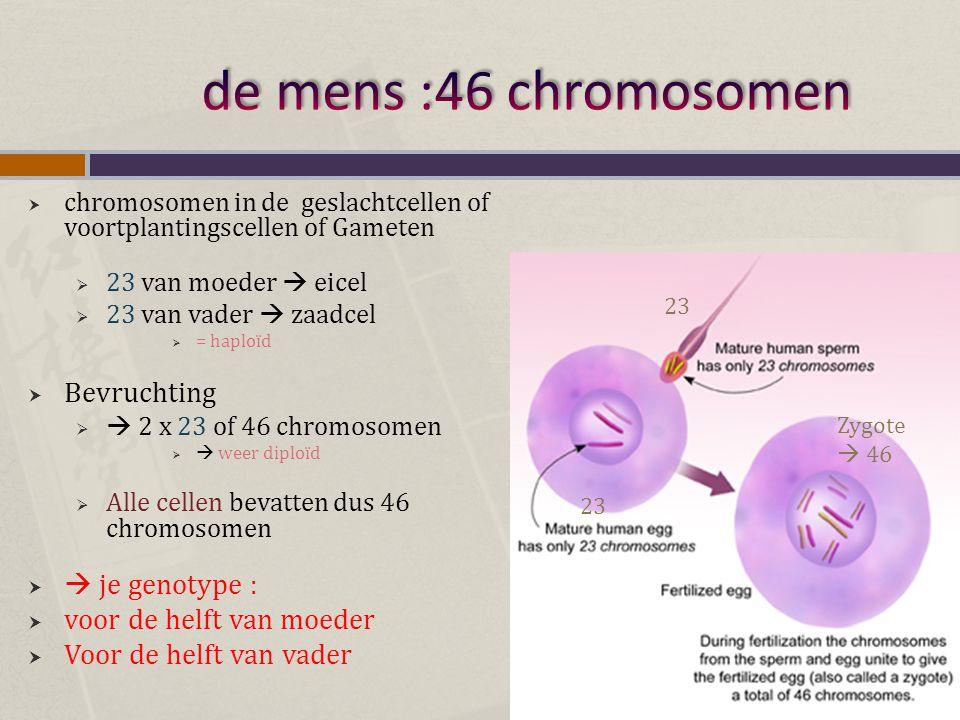  chromosomen in de geslachtcellen of voortplantingscellen of Gameten  23 van moeder  eicel  23 van vader  zaadcel  = haploïd  Bevruchting   2