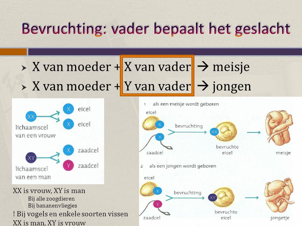  X-chromosoom bevat meer genen dan het y-chromosoom  Y- chromosoom bevat zeer weinig genen