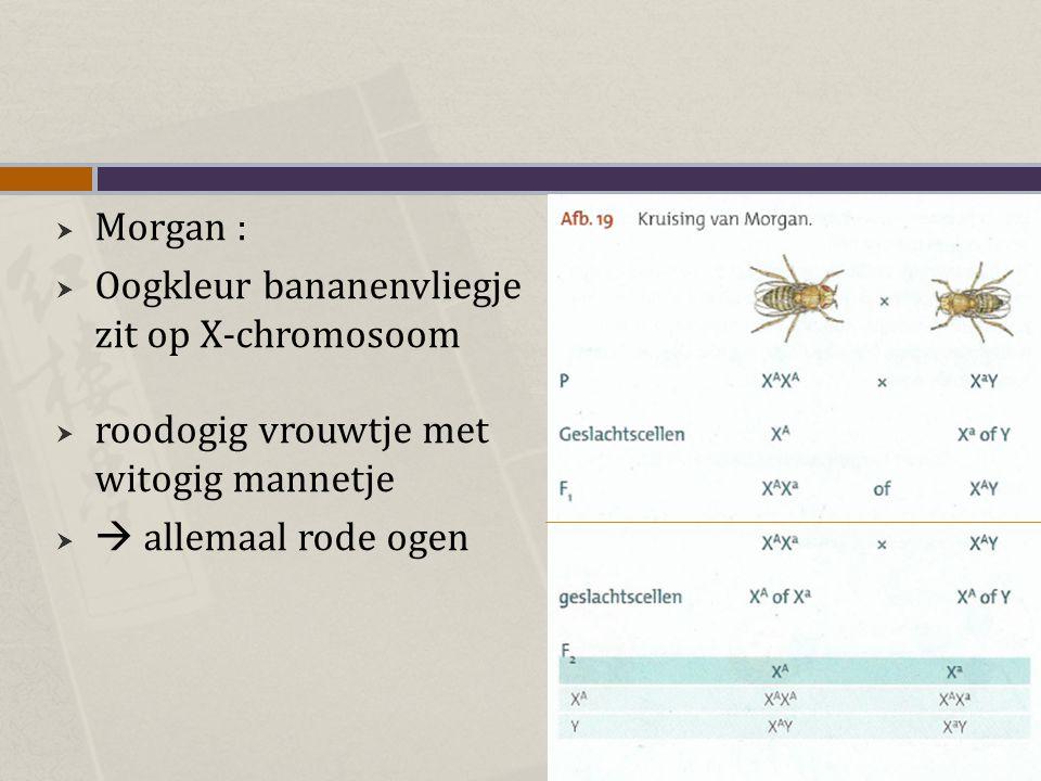  Morgan :  Oogkleur bananenvliegje zit op X-chromosoom  roodogig vrouwtje met witogig mannetje   allemaal rode ogen