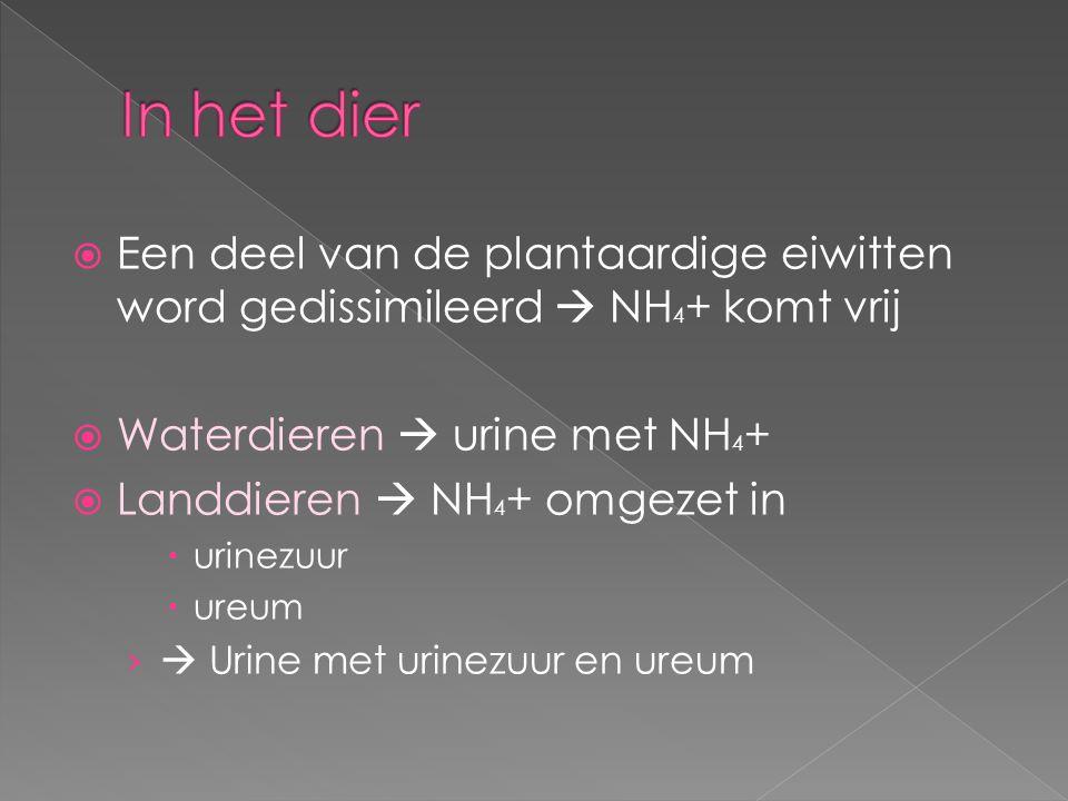  Een deel van de plantaardige eiwitten word gedissimileerd  NH 4 + komt vrij  Waterdieren  urine met NH 4 +  Landdieren  NH 4 + omgezet in  uri