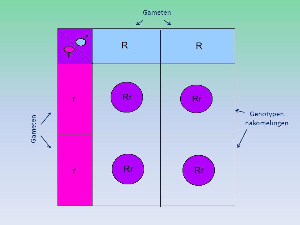 Gameten Genotypen nakomelingen