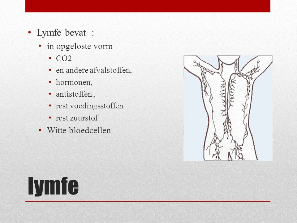 lymfe Lymfe bevat : in opgeloste vorm CO2 en andere afvalstoffen, hormonen, antistoffen, rest voedingsstoffen rest zuurstof Witte bloedcellen
