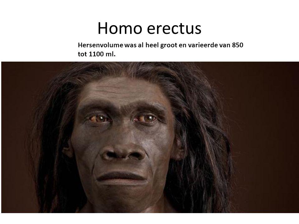 Homo erectus Hersenvolume was al heel groot en varieerde van 850 tot 1100 ml.