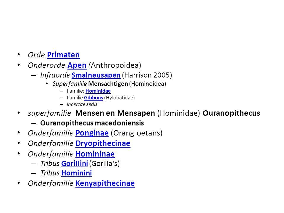 Orde PrimatenPrimaten Onderorde Apen (Anthropoidea)Apen – Infraorde Smalneusapen (Harrison 2005)Smalneusapen Superfamilie Mensachtigen (Hominoidea) –