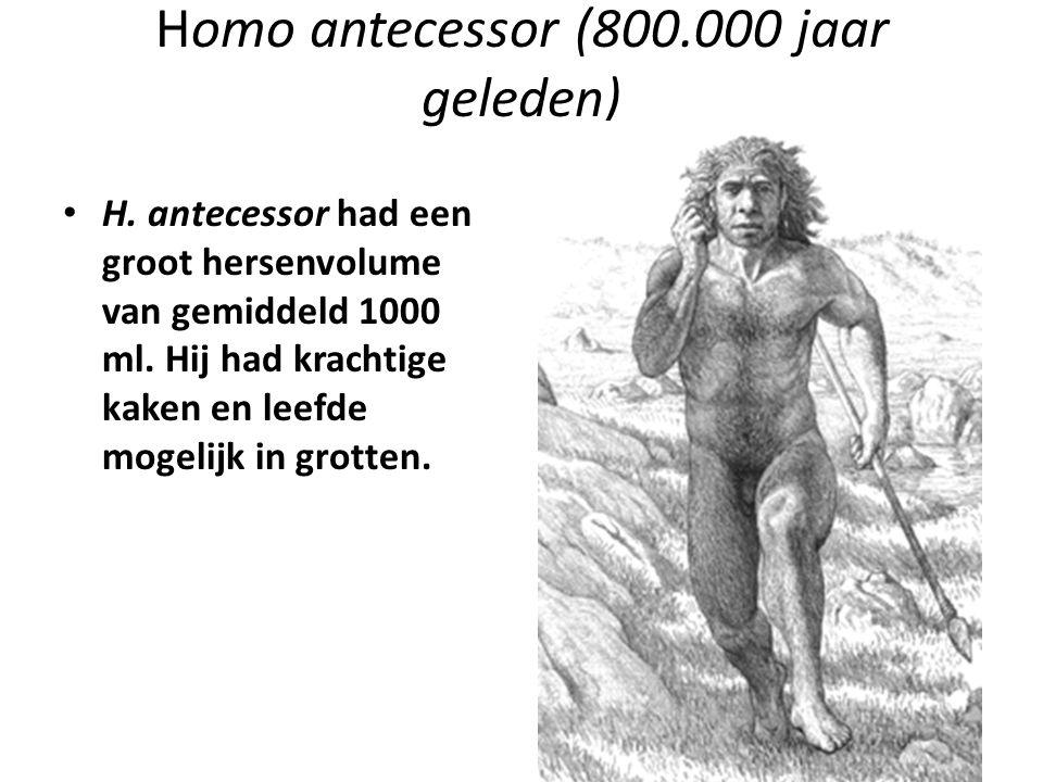 Homo antecessor (800.000 jaar geleden) H. antecessor had een groot hersenvolume van gemiddeld 1000 ml. Hij had krachtige kaken en leefde mogelijk in g