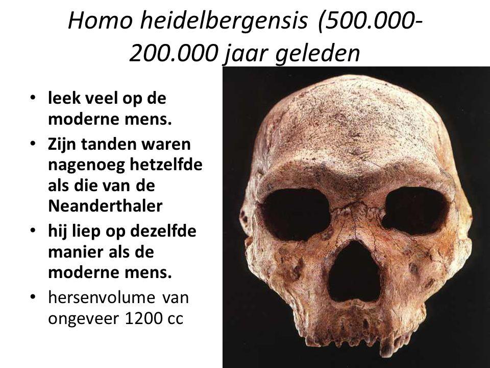 Homo heidelbergensis (500.000- 200.000 jaar geleden leek veel op de moderne mens. Zijn tanden waren nagenoeg hetzelfde als die van de Neanderthaler hi