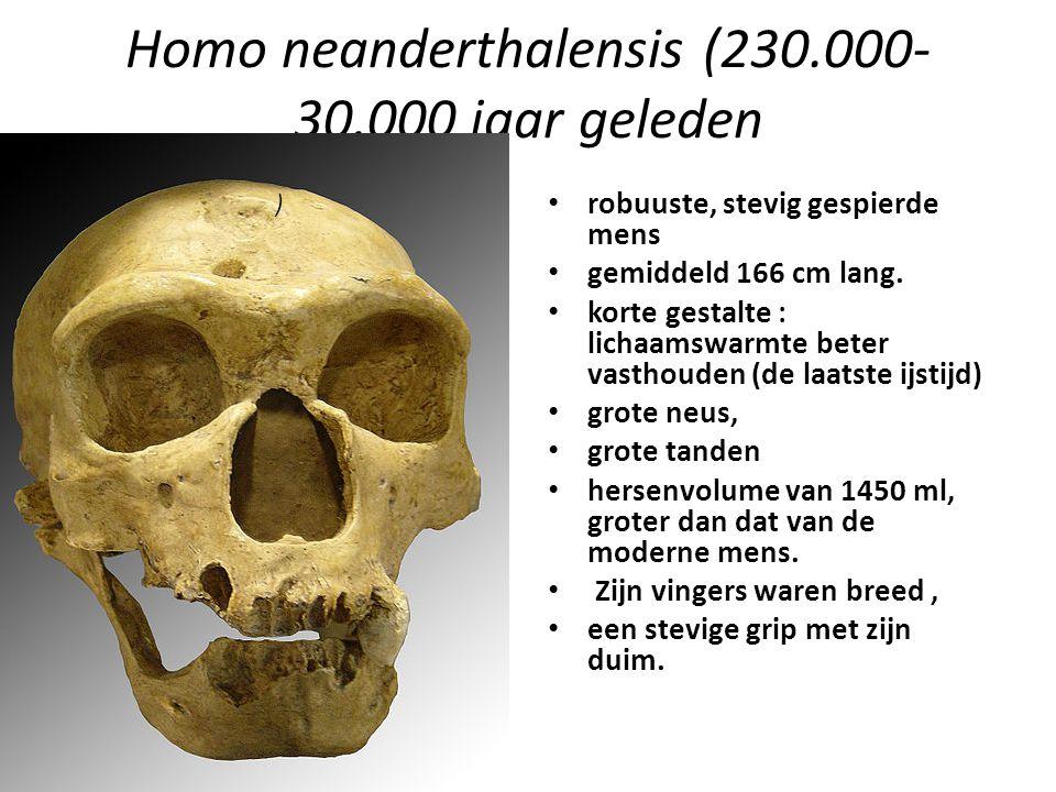 Homo neanderthalensis (230.000- 30.000 jaar geleden robuuste, stevig gespierde mens gemiddeld 166 cm lang. korte gestalte : lichaamswarmte beter vasth