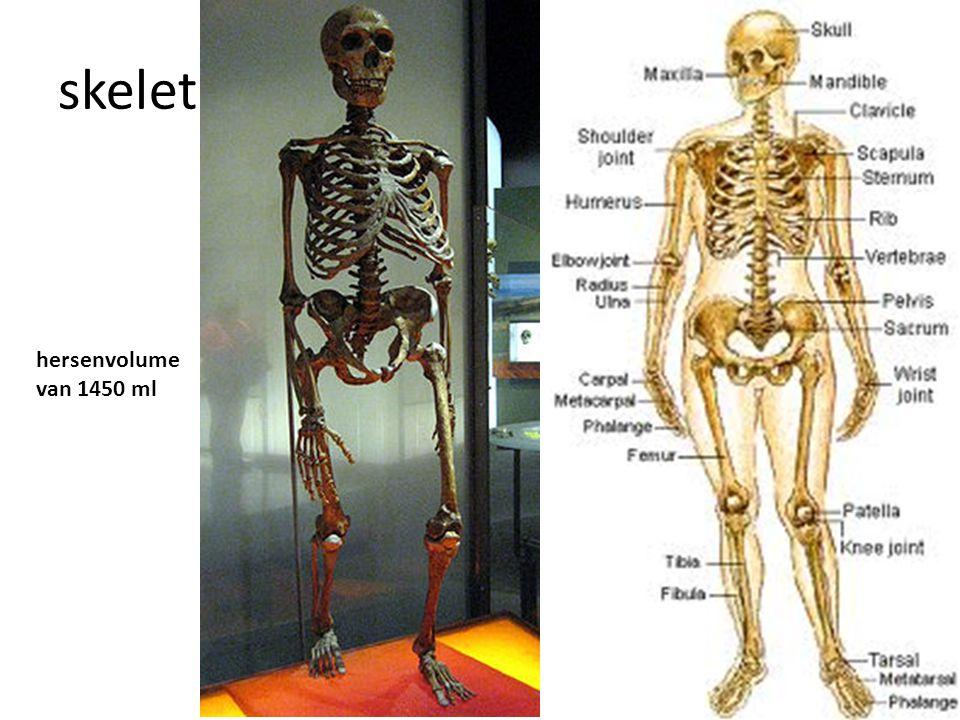 skelet hersenvolume van 1450 ml