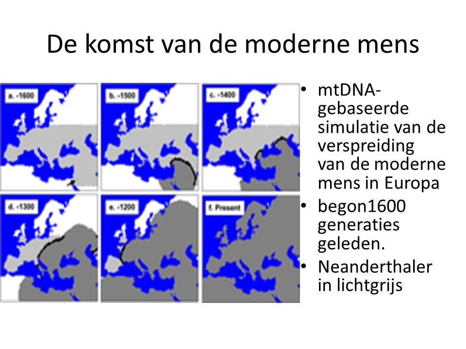 De komst van de moderne mens mtDNA- gebaseerde simulatie van de verspreiding van de moderne mens in Europa begon1600 generaties geleden. Neanderthaler