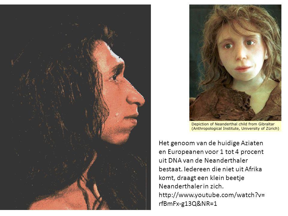 Het genoom van de huidige Aziaten en Europeanen voor 1 tot 4 procent uit DNA van de Neanderthaler bestaat. Iedereen die niet uit Afrika komt, draagt e