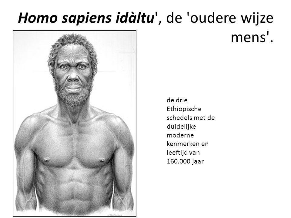 Homo sapiens idàltu', de 'oudere wijze mens'. de drie Ethiopische schedels met de duidelijke moderne kenmerken en leeftijd van 160.000 jaar