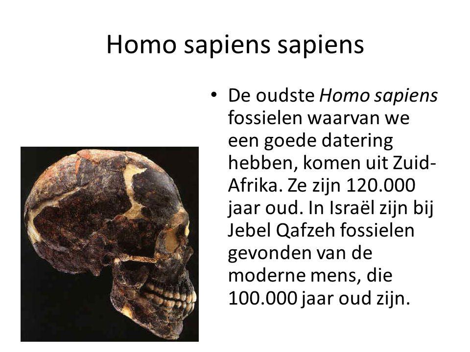 Homo sapiens sapiens De oudste Homo sapiens fossielen waarvan we een goede datering hebben, komen uit Zuid- Afrika. Ze zijn 120.000 jaar oud. In Israë