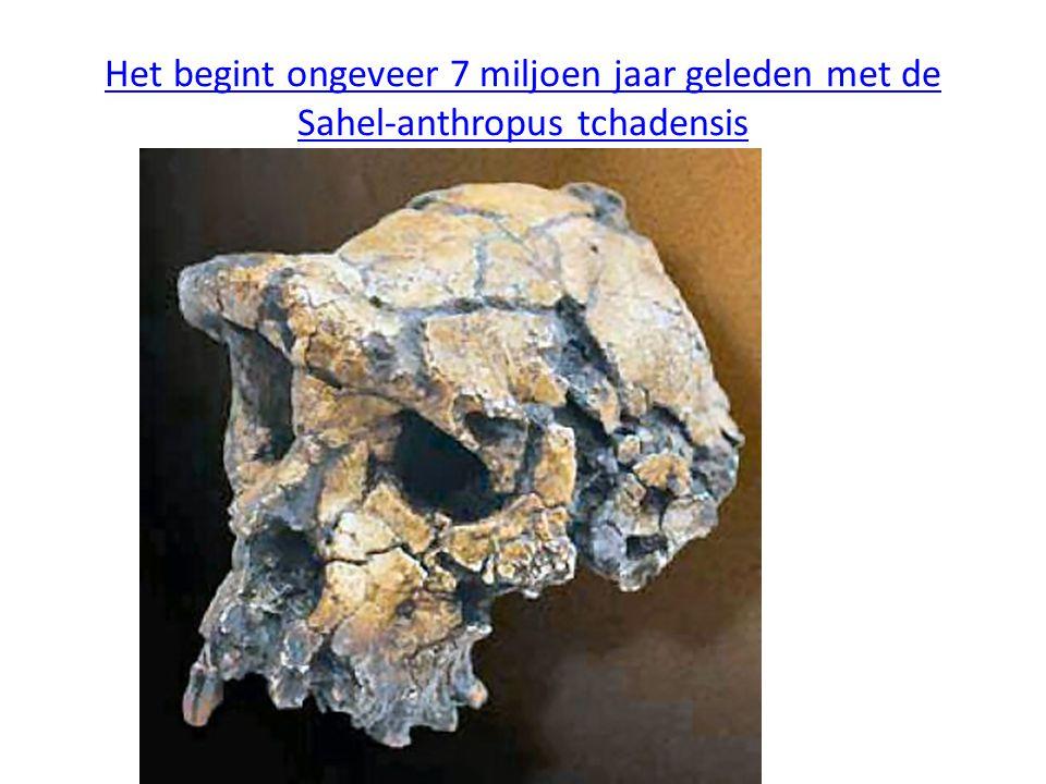 Homo heidelbergensis (500.000- 200.000 jaar geleden leek veel op de moderne mens.