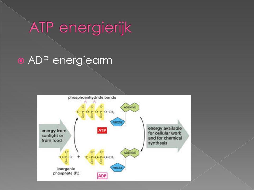  ADP energiearm