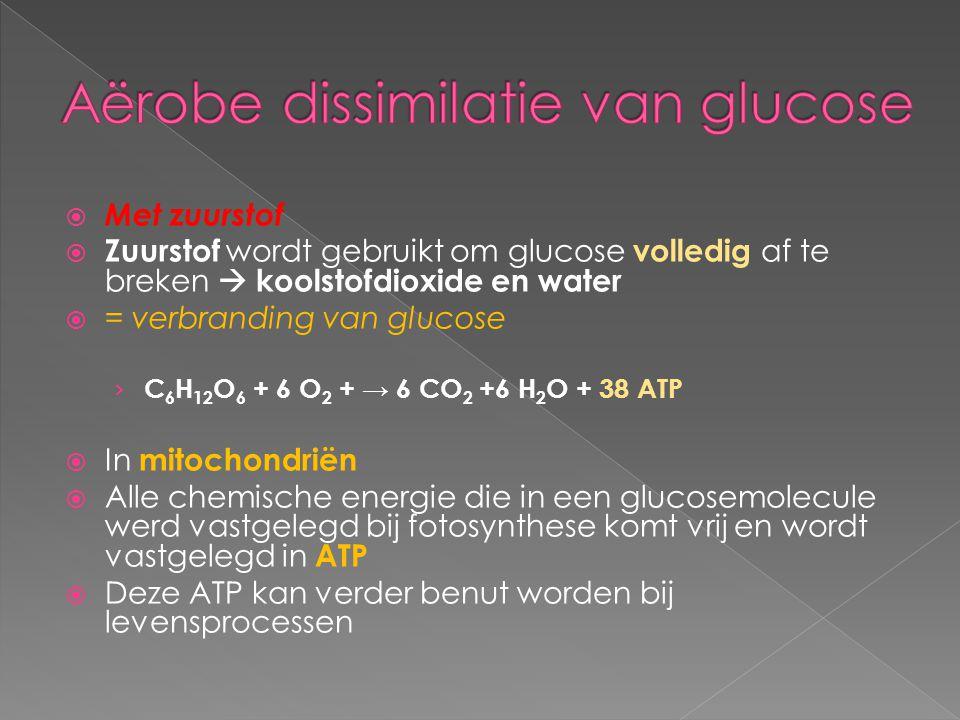  Met zuurstof  Zuurstof wordt gebruikt om glucose volledig af te breken  koolstofdioxide en water  = verbranding van glucose › C 6 H 12 O 6 + 6 O