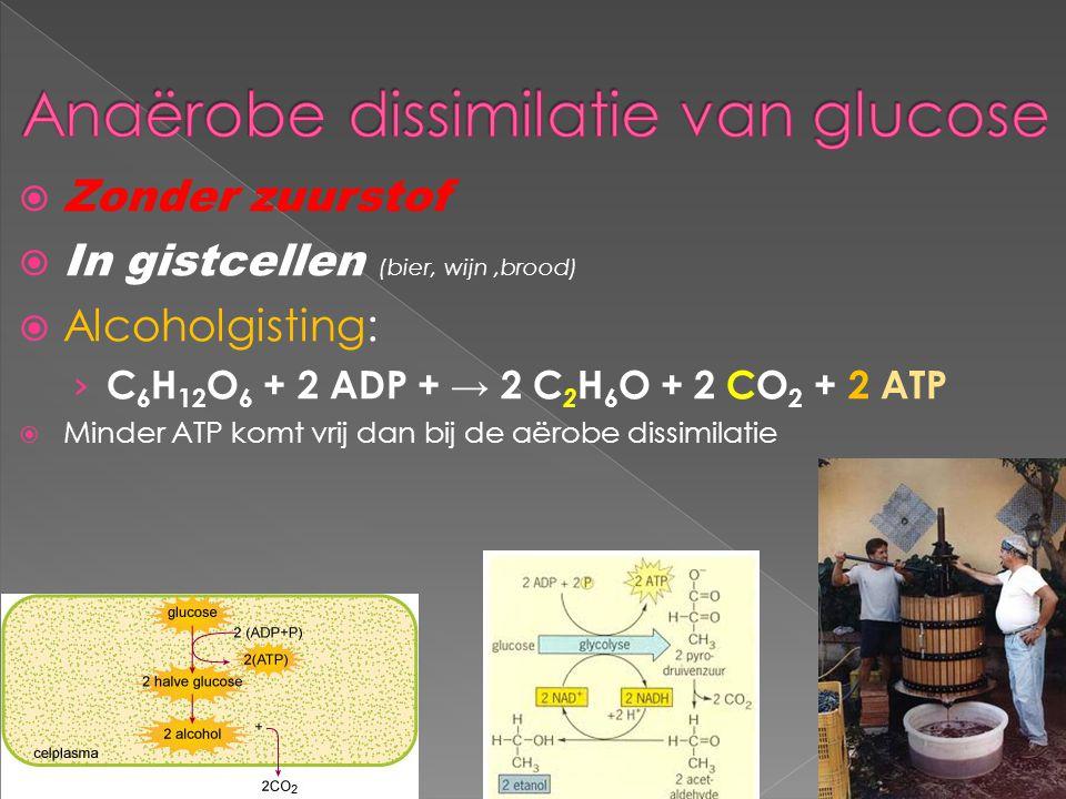  Zonder zuurstof  In gistcellen (bier, wijn,brood)  Alcoholgisting: › C 6 H 12 O 6 + 2 ADP + → 2 C 2 H 6 O + 2 CO 2 + 2 ATP  Minder ATP komt vrij