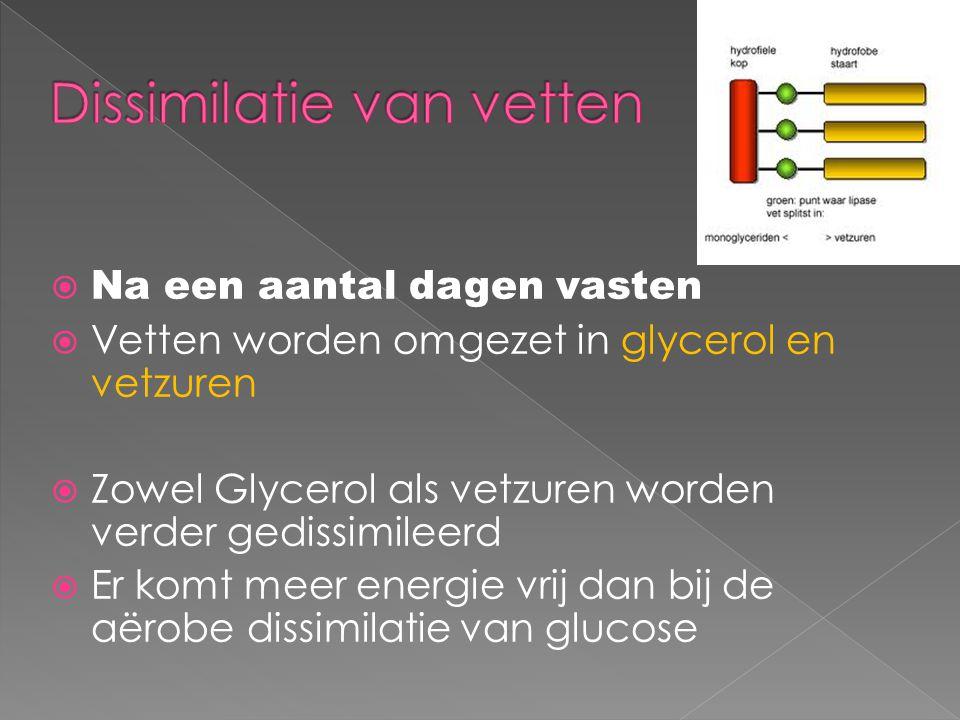  Na een aantal dagen vasten  Vetten worden omgezet in glycerol en vetzuren  Zowel Glycerol als vetzuren worden verder gedissimileerd  Er komt meer