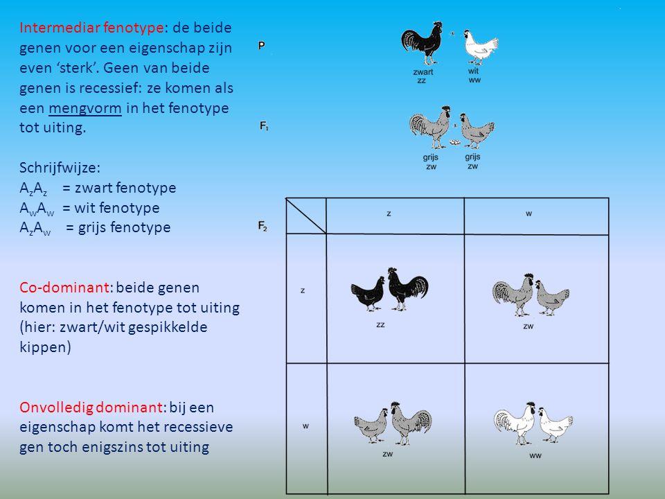 Intermediar fenotype: de beide genen voor een eigenschap zijn even 'sterk'. Geen van beide genen is recessief: ze komen als een mengvorm in het fenoty