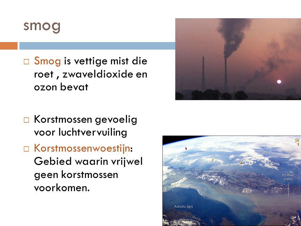 smog  Smog is vettige mist die roet, zwaveldioxide en ozon bevat  Korstmossen gevoelig voor luchtvervuiling  Korstmossenwoestijn: Gebied waarin vrijwel geen korstmossen voorkomen.