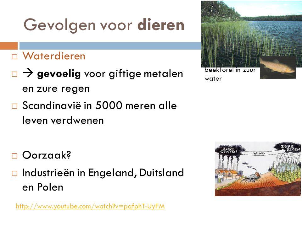 Gevolgen voor dieren  Waterdieren   gevoelig voor giftige metalen en zure regen  Scandinavië in 5000 meren alle leven verdwenen  Oorzaak?  Indus