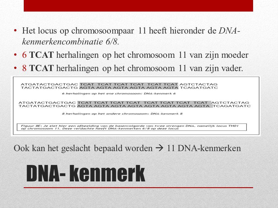 DNA- kenmerk Het locus op chromosoompaar 11 heeft hieronder de DNA- kenmerkencombinatie 6/8. 6 TCAT herhalingen op het chromosoom 11 van zijn moeder 8