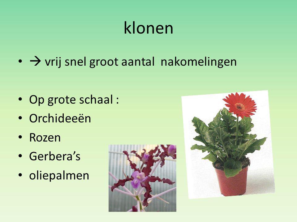 klonen  vrij snel groot aantal nakomelingen Op grote schaal : Orchideeën Rozen Gerbera's oliepalmen