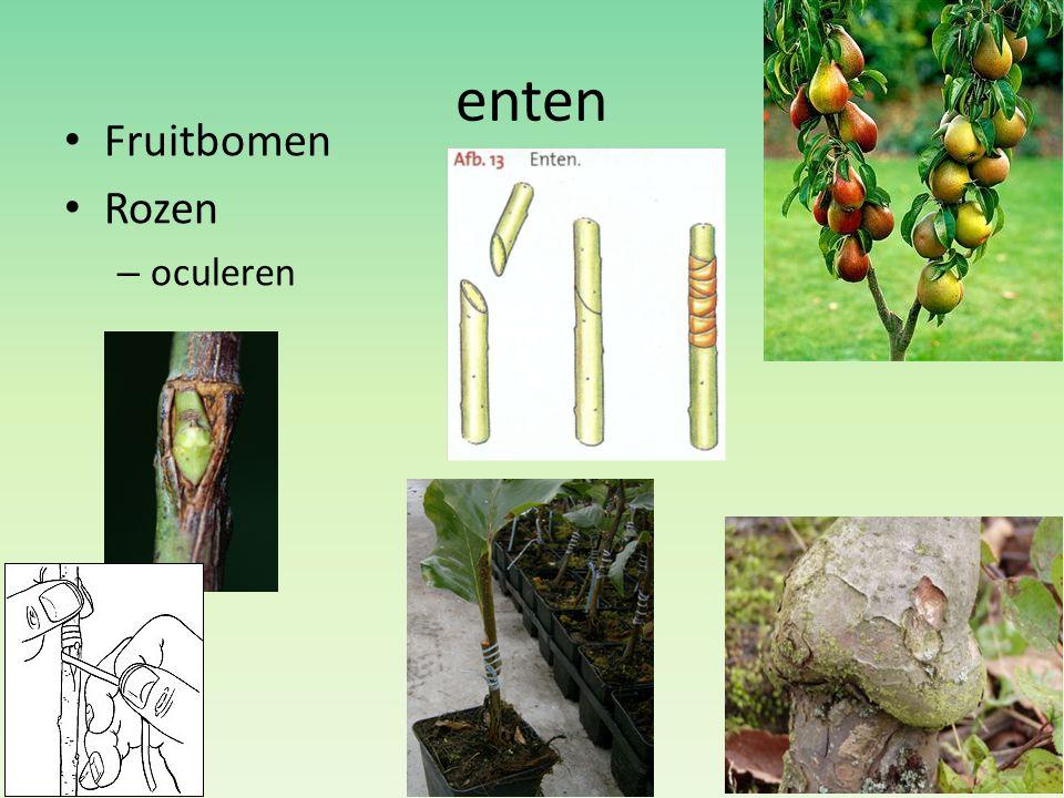 enten Fruitbomen Rozen – oculeren