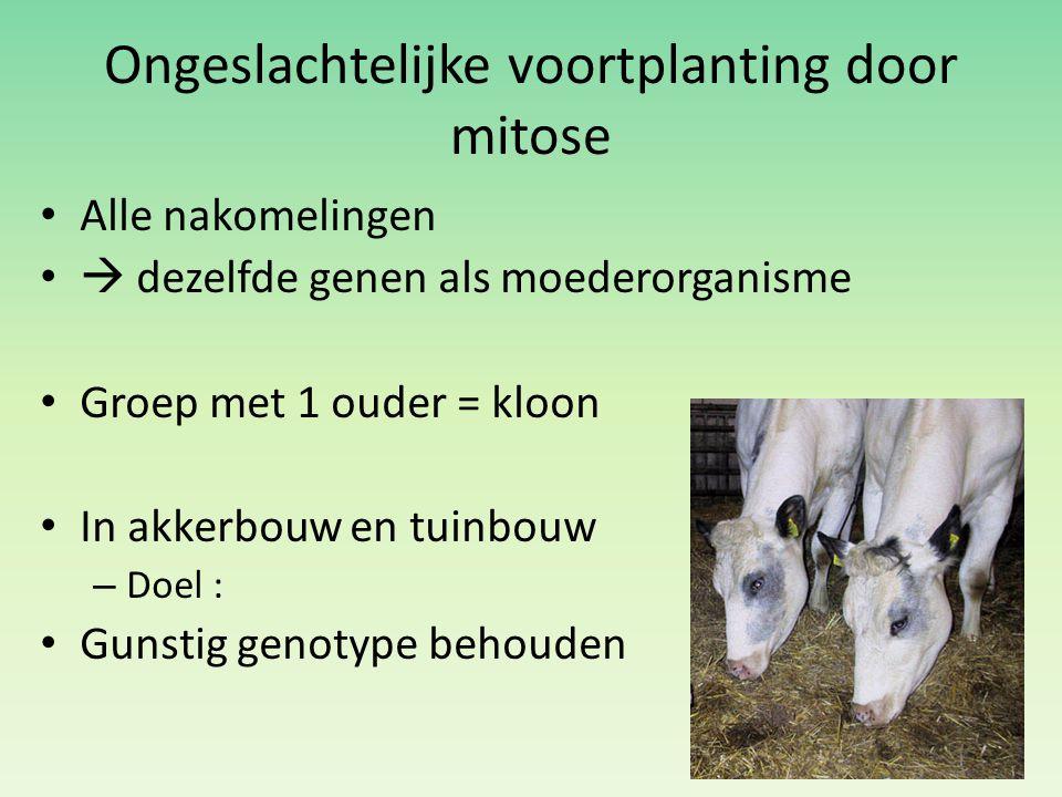 Ongeslachtelijke voortplanting door mitose Alle nakomelingen  dezelfde genen als moederorganisme Groep met 1 ouder = kloon In akkerbouw en tuinbouw –