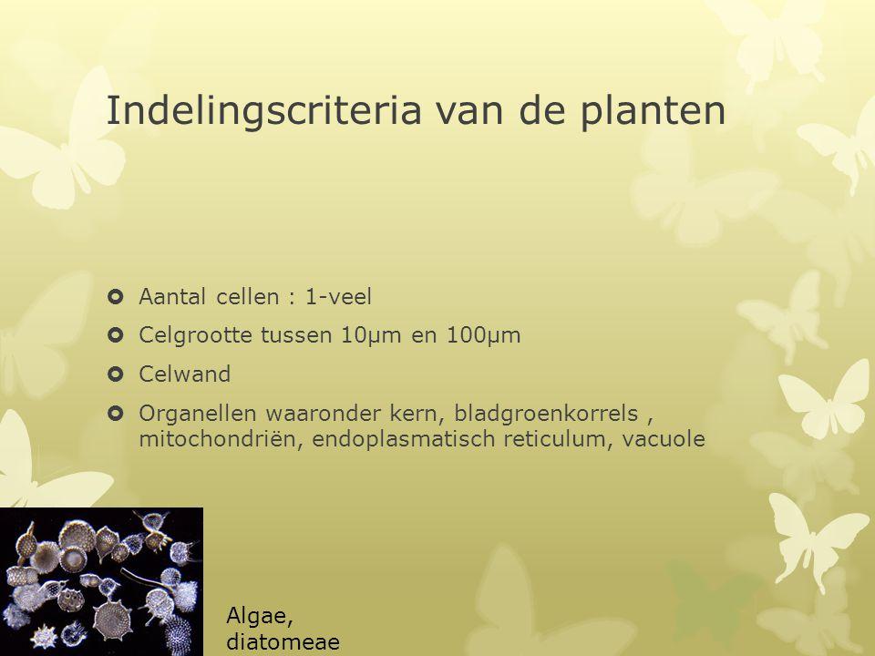Indelingscriteria van de planten  Aantal cellen : 1-veel  Celgrootte tussen 10μm en 100μm  Celwand  Organellen waaronder kern, bladgroenkorrels, m