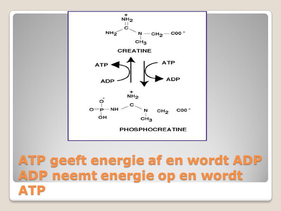 ATP geeft energie af en wordt ADP ADP neemt energie op en wordt ATP