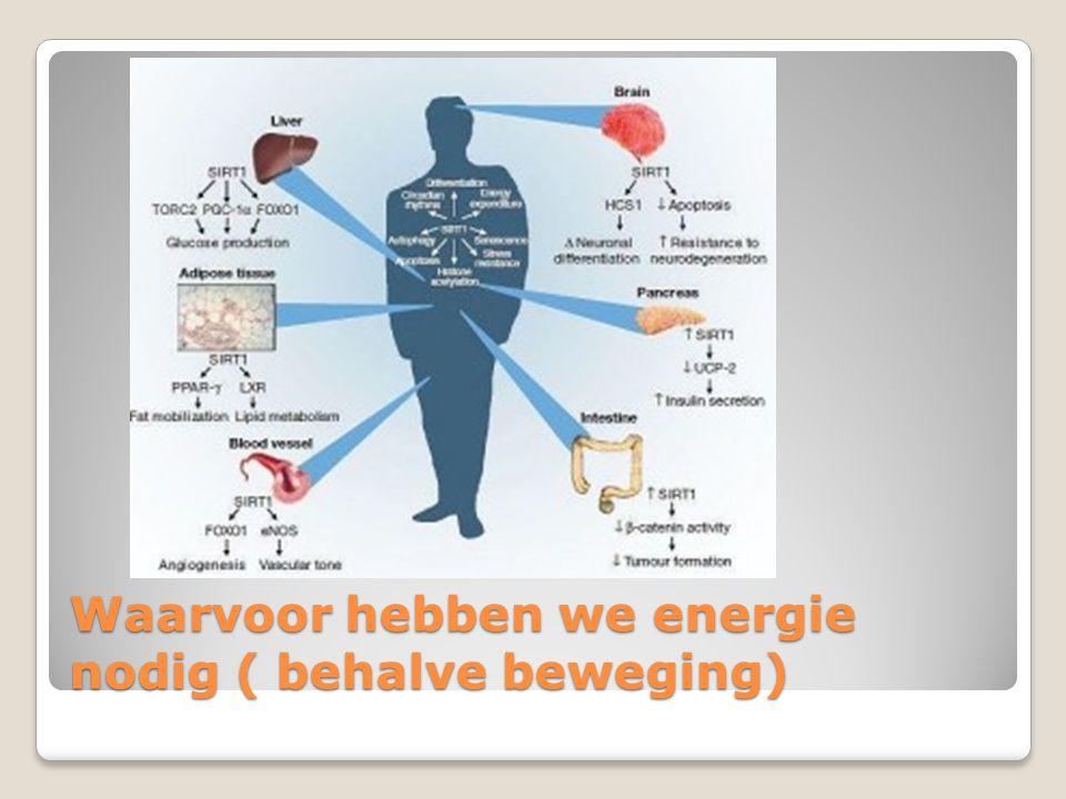 Waarvoor hebben we energie nodig ( behalve beweging)
